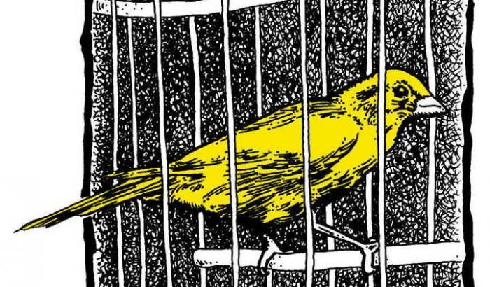 canari dans uen cage